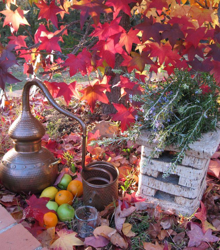 Taller de aromaterapia y fhitocosmética